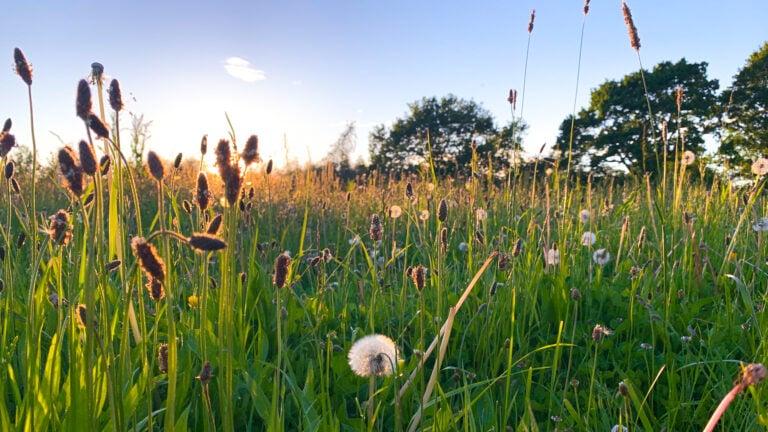 Eine Wildblumenwiese im Abendlicht