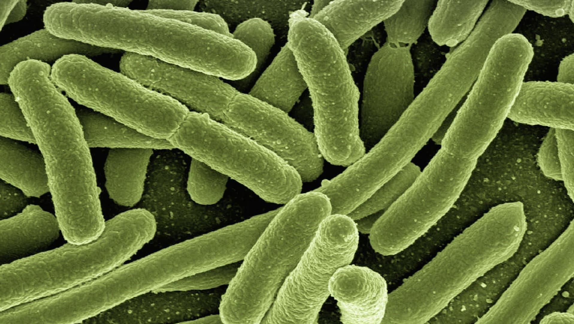Viele grüne Bakterien unter dem Mikroskop