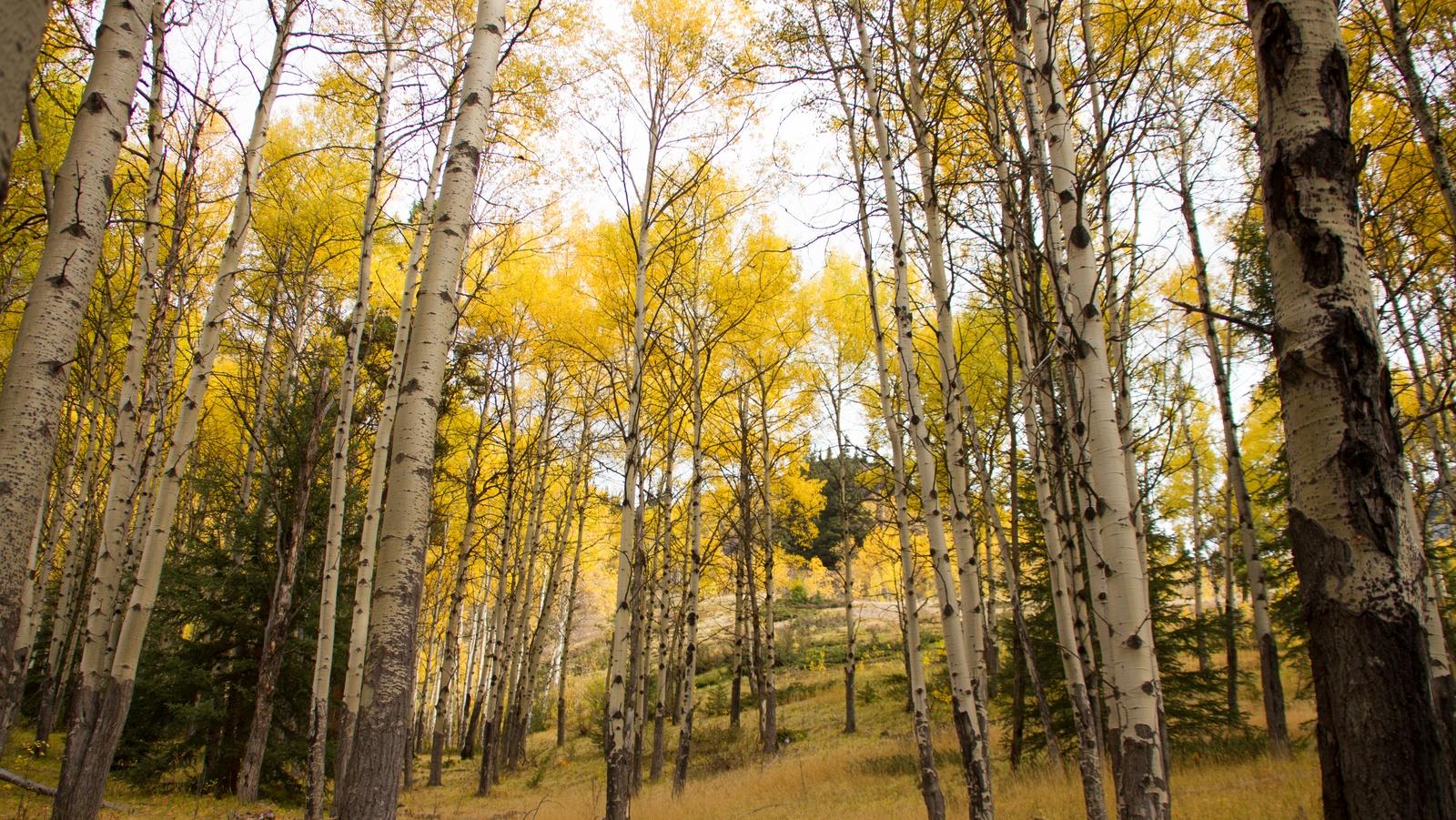Zwischen Banff und Jasper ist Christian Gansen vom Blog ways2travel