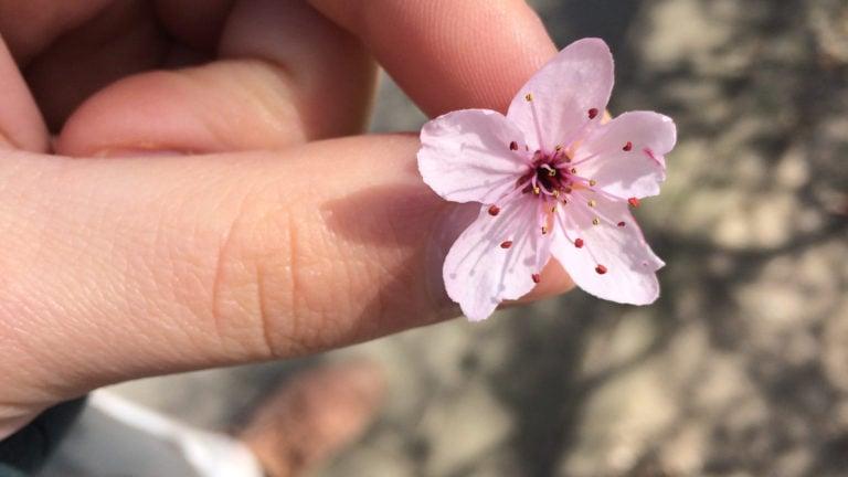 Blüte in der Hand