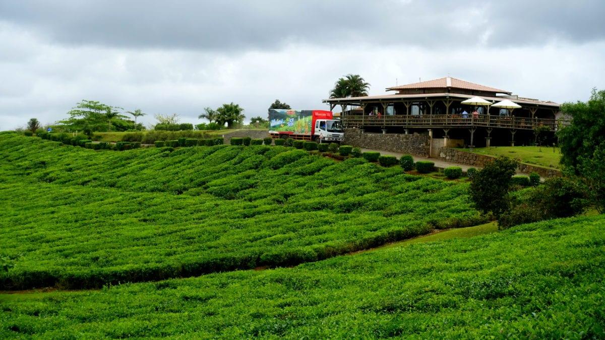 Die Teeplantagen Bois Cherie auf Mauritius
