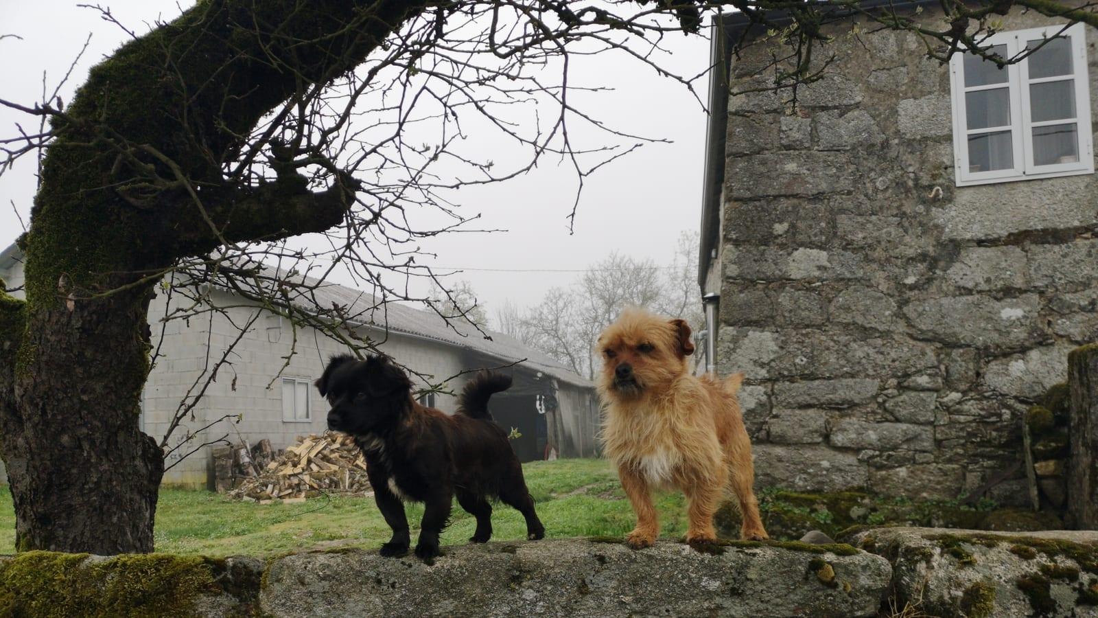 Heute kommen wir an den berühmten Camino-Hunden vorbei.