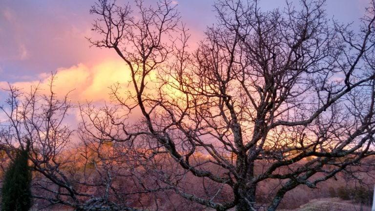 Der Meditationsbaum von Claudia von Wasser und Yoga: Entstand hier die Idee zum Watsu?