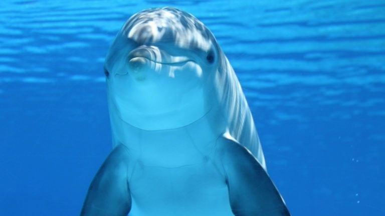Kurz bevor der Arbeitstag startet noch schnell mit Delfinen schwimmen: Das wurde neulich in Mauritius für mich Realität.
