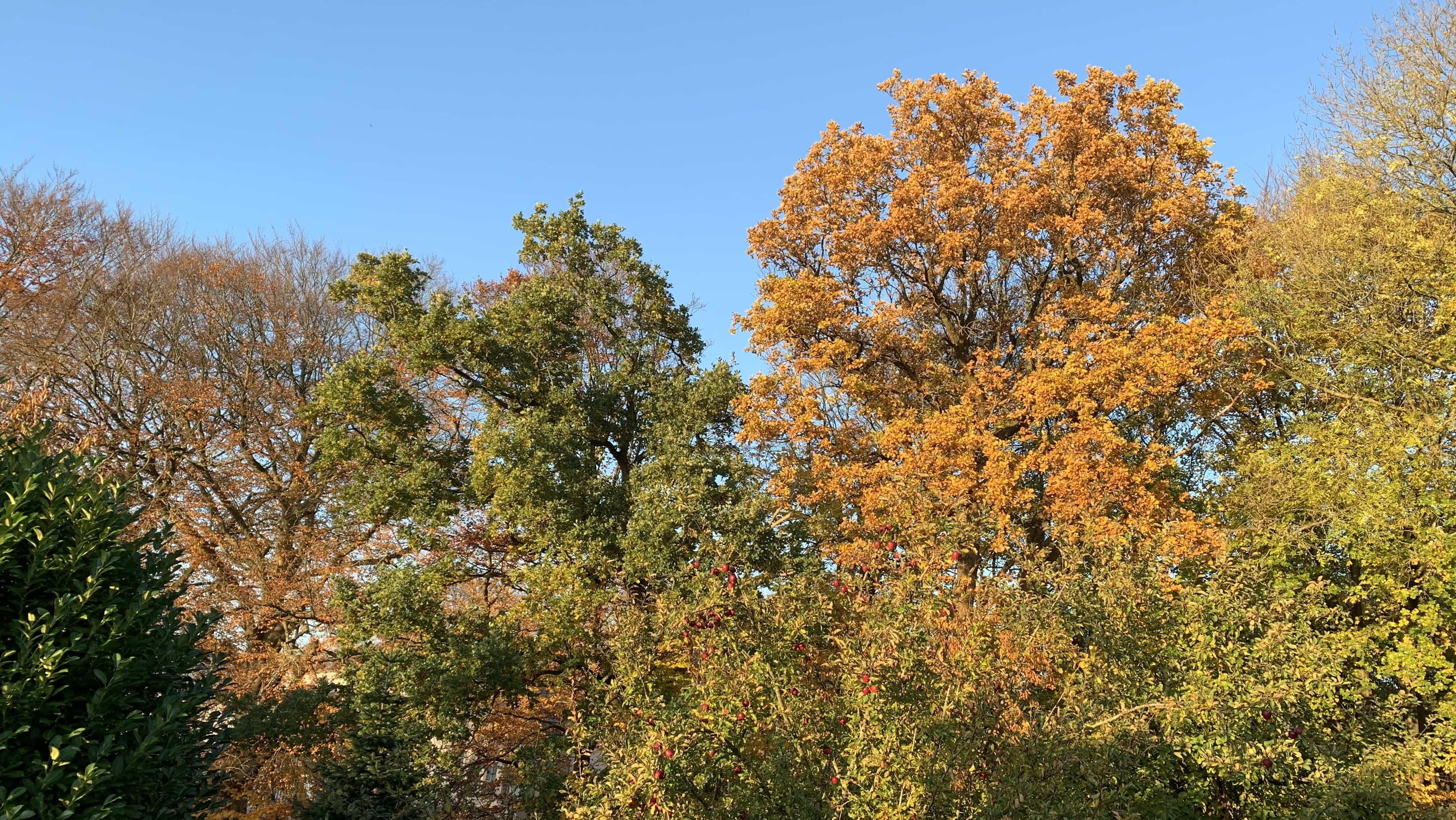 Deutschland im November: Die Blätter an den Bäumen färben sich bunt