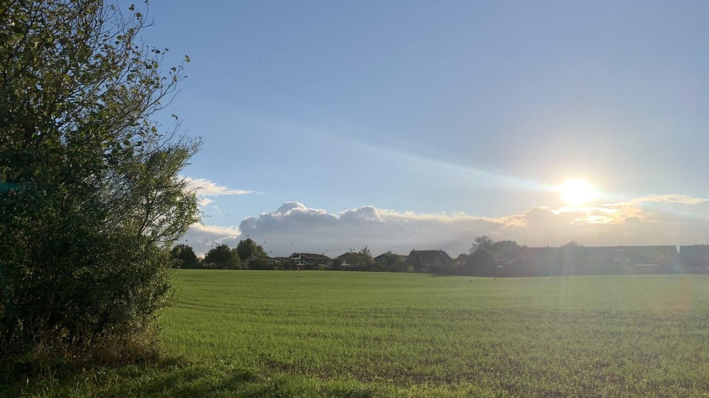Mitten in Flensburg wird noch Landwirtschaft betrieben