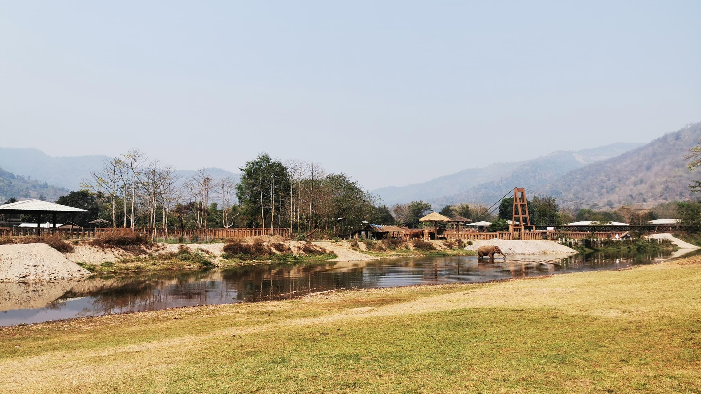 Als wir den Elephant Nature Park erreichten, war ich jedoch gleich positiv überrascht und erleichtert. Ich sah ein großes, idyllisches, vom Dschungel und Bergen gesäumtes Areal, auf dem frei herumlaufende Elefanten, Büffel und allerhand Kleintiere ihren restlichen Lebensweg antreten durften.