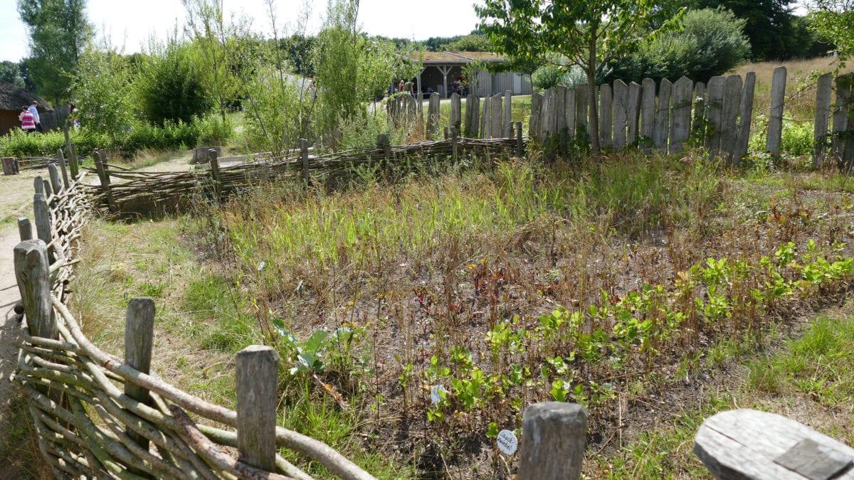 Garten in Haithabu