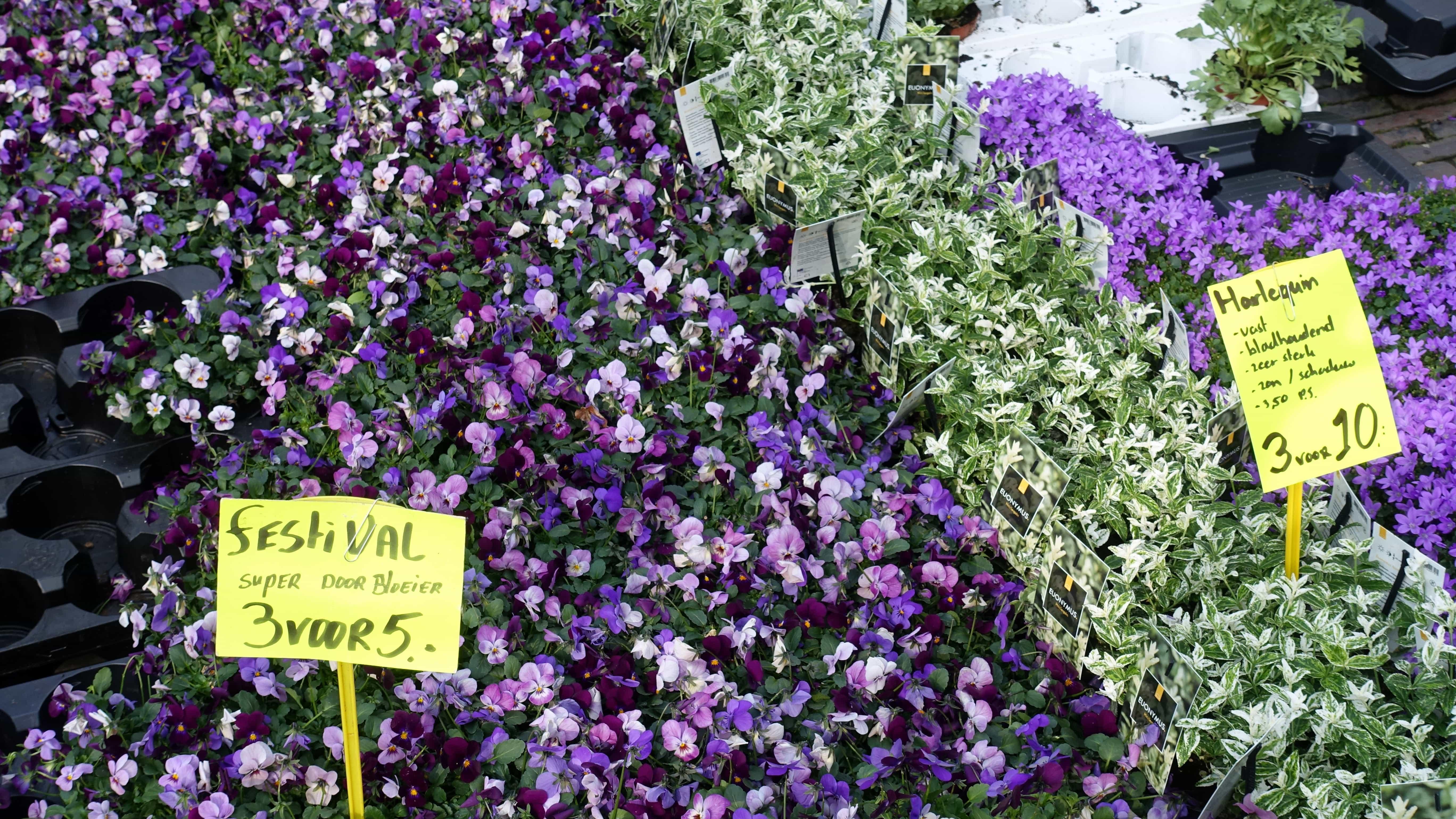 Blumenmarkt am Jankershof in Utrecht in Holland