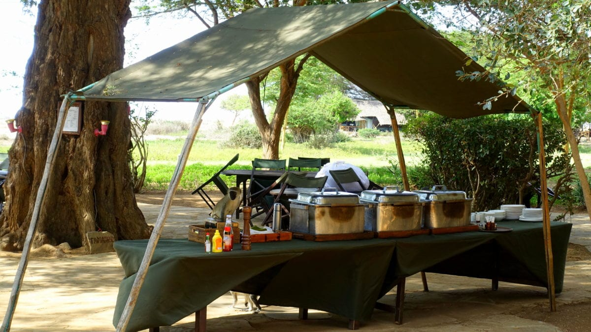 Affen am Mittagsbuffet im Tsavo East National Park in Kenia