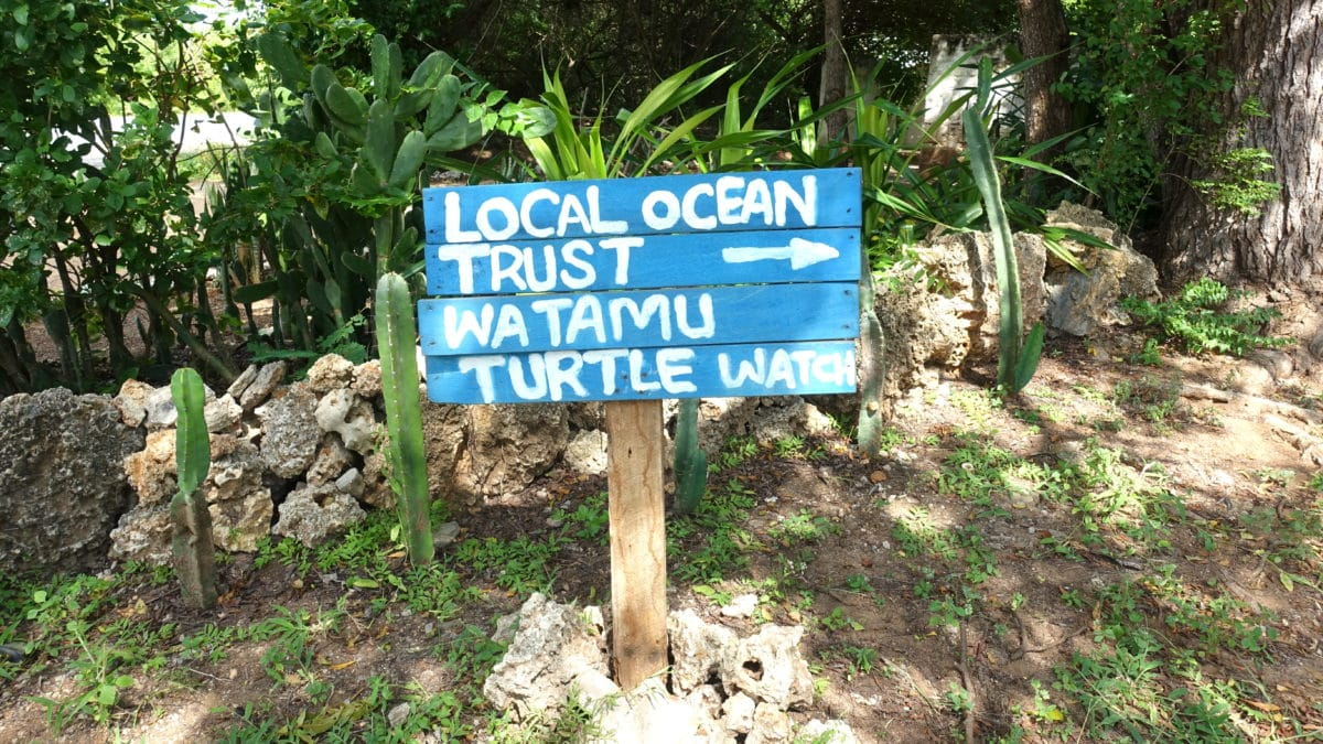 Das Local Ocean Trust: Watamu Turtle Watch