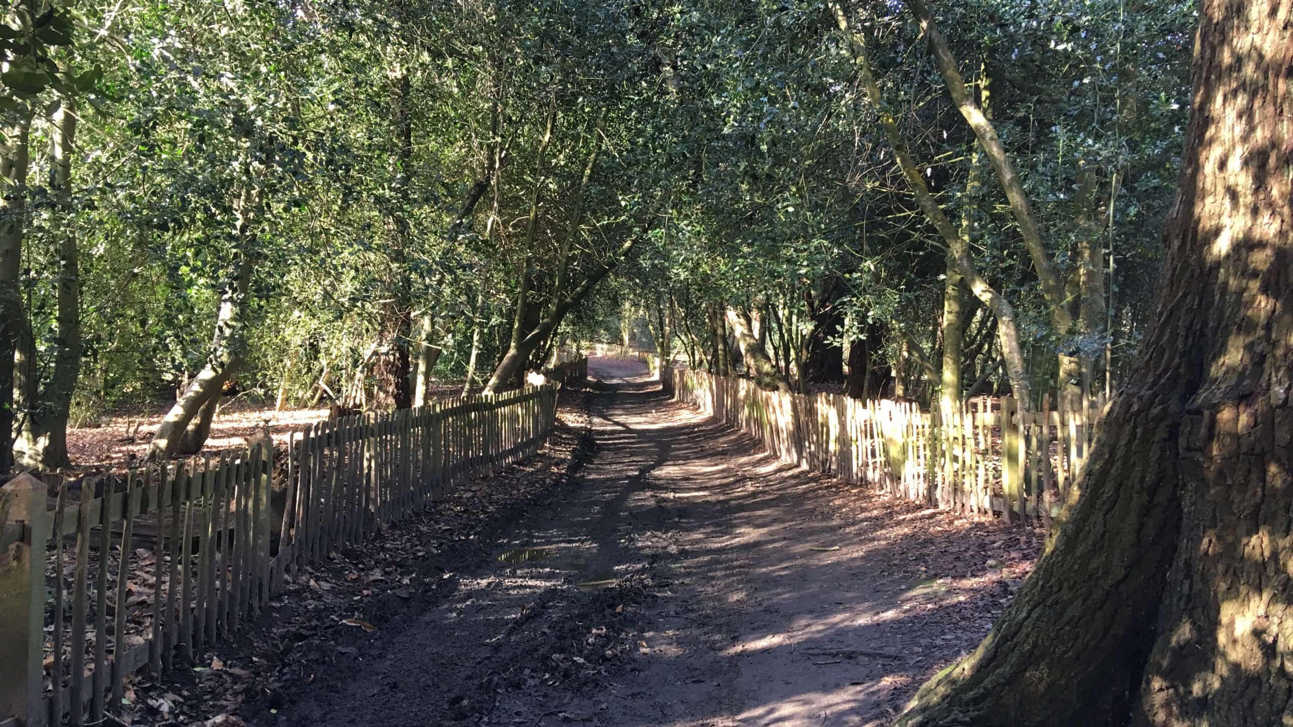 Sandweg durch Hampstead Heath, zwischen Gärten und Bäumen