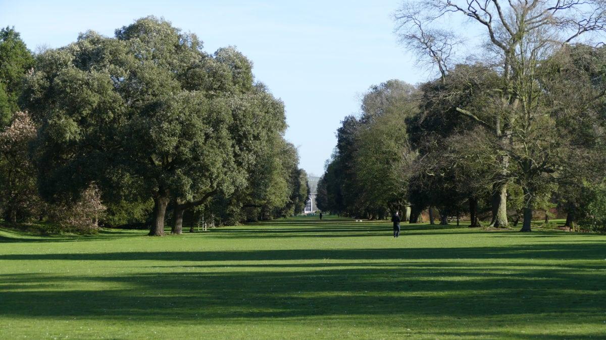 Hier, mitten in Kew Gardens, wandere ich durch eine blühende Parklandschaft – und das mitten im Januar!