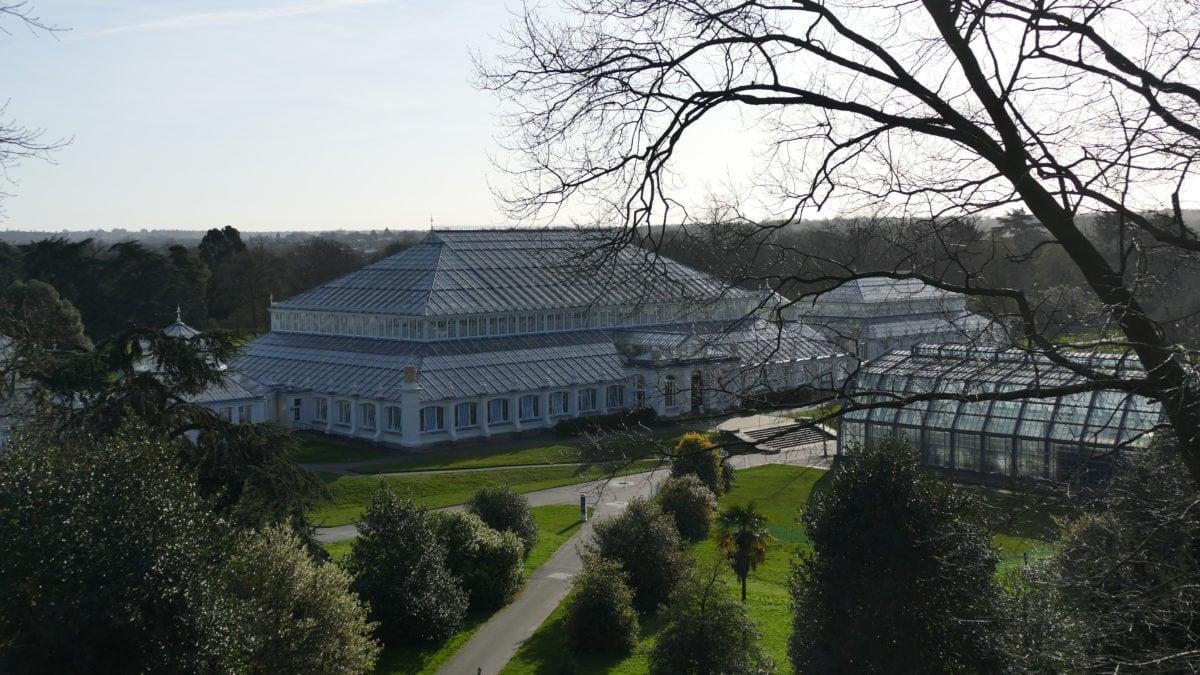 Viele Stunden in Kew Gardens verbringe ich damit, exotische Pflanzen aus Südafrika, Australien, Neuseeland und Asien im Temperate House zu bewundern.
