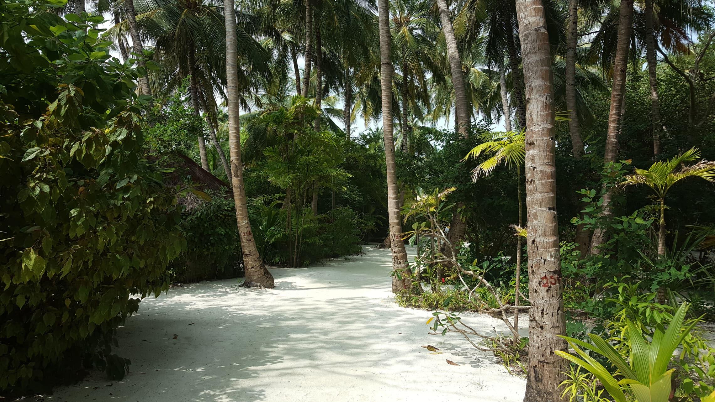 Unser Weg zum Wasser führte über einen schmalen Sandweg durch Palmen hindurch.