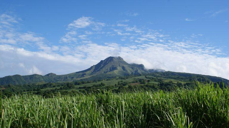Vor schöner Kulisse liegen die Zuckerrohrplantagen auf Martinique. Das Zuckerrohr wird für die Produktion vom Rhum Agricole genutzt.