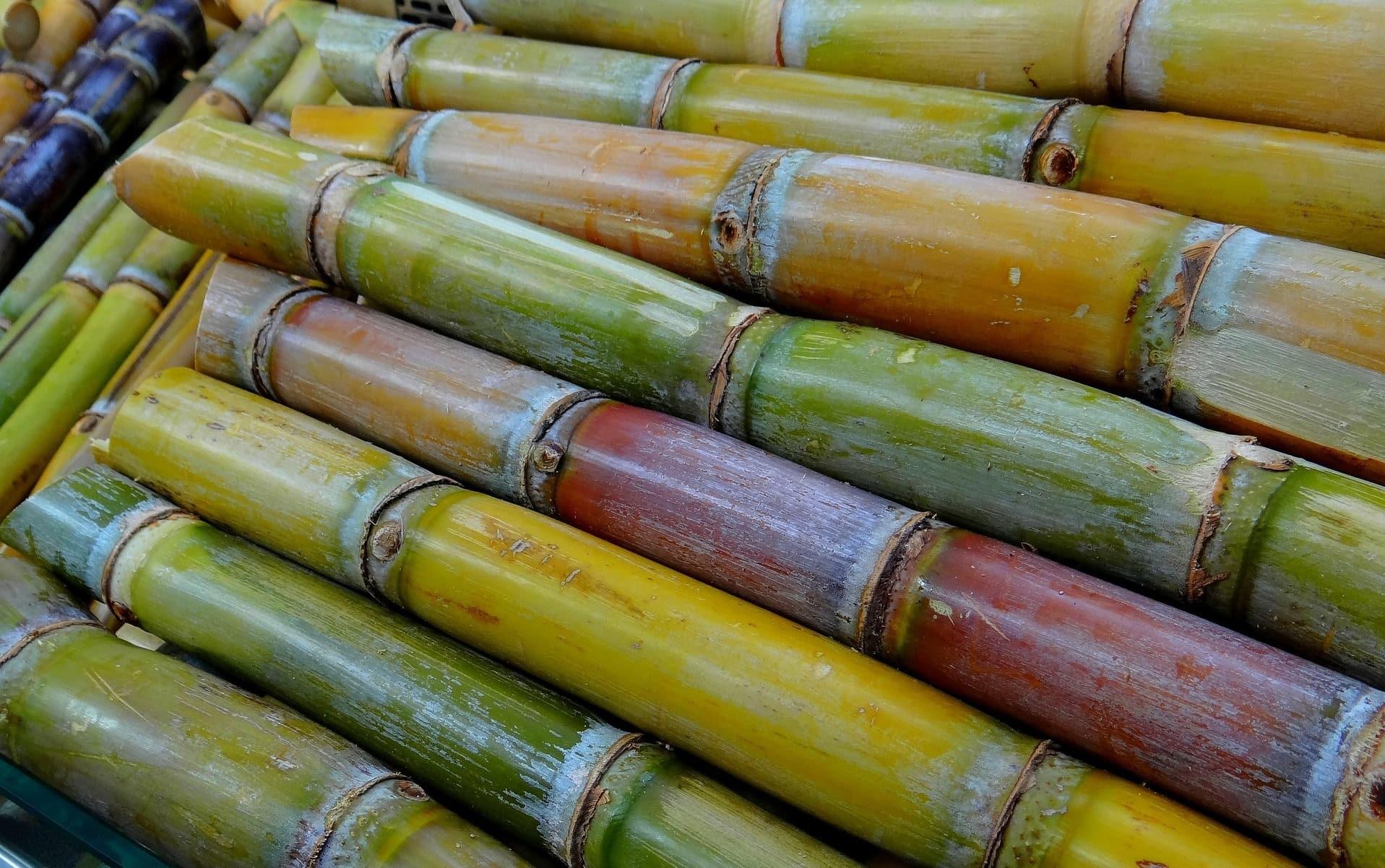 Aus dem Zuckerrohr von Martinique wird der weltberühmte Rhum Agricole produziert