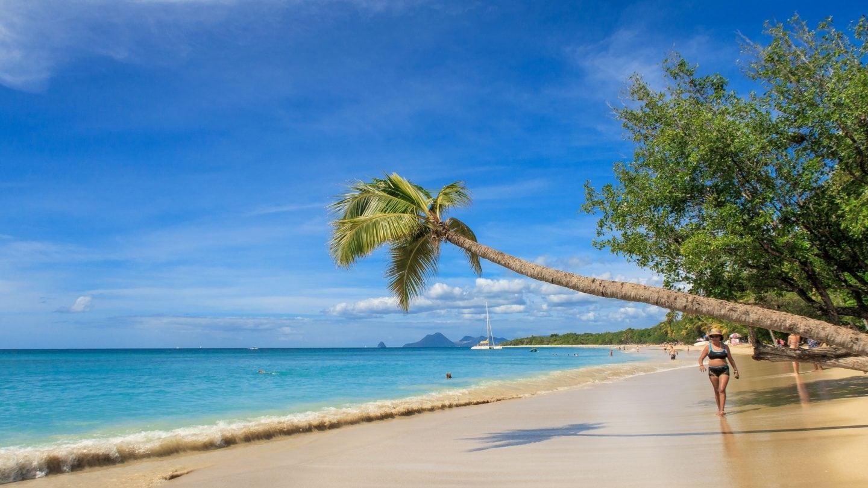 Palme am Strand von Martinique