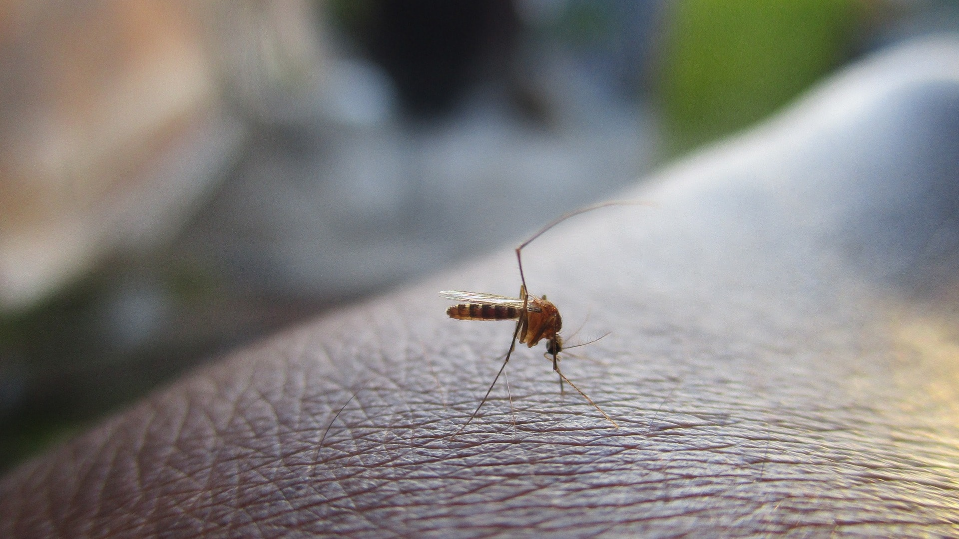Langzeitprophylaxe gegen Malaria: Hier eine Mücke