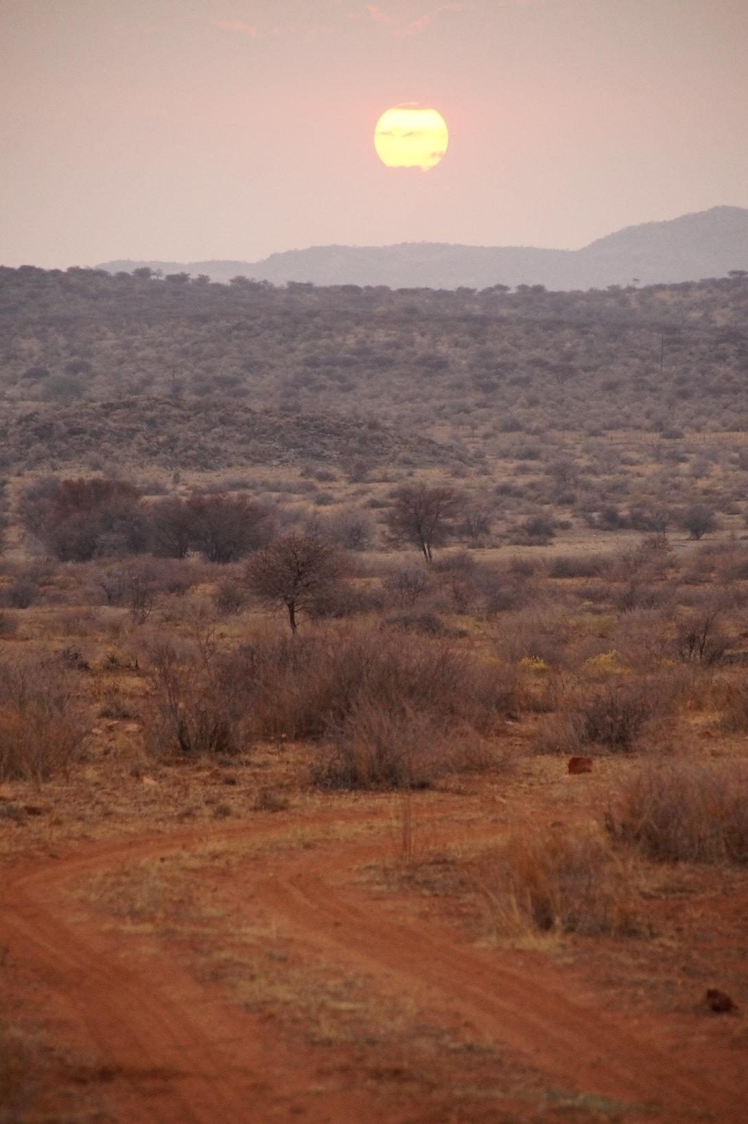 Sonnenuntergang im Etosha-Nationalpark in Namibia