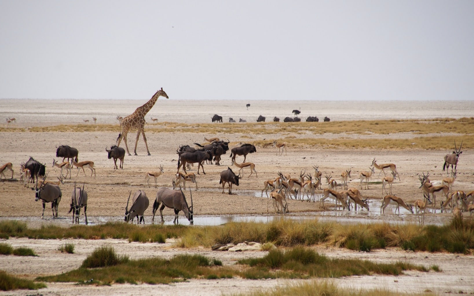 Auf Safari im Etosha Nationalpark in Namibia
