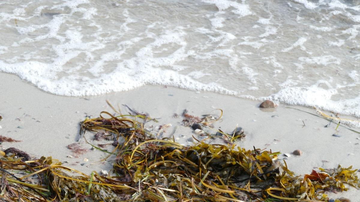 Wasser am Strand mit Algen