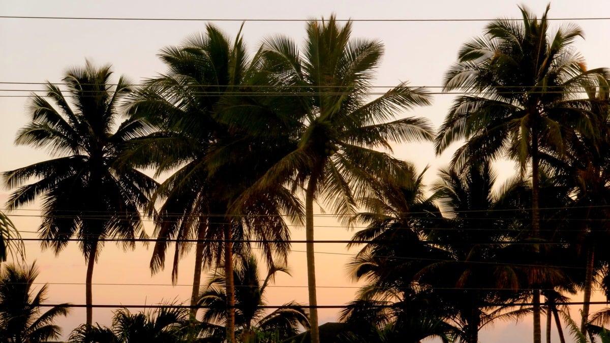 Hinter den Palmen geht die Sonne unter in Cabarete in der Dominikanischen Republik