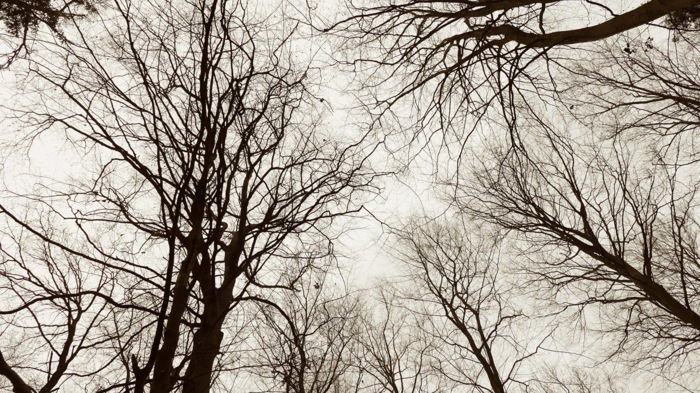 Bäume im Wald von unten