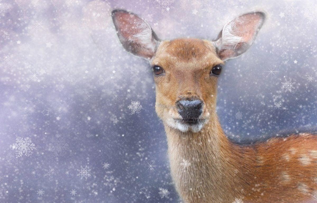 Ein Reh vor einem schneienden Hintergrund
