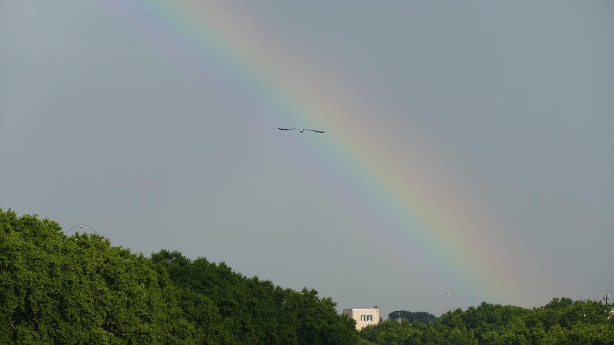 Regenbogen über dem Tiber in Rom mit Vogel