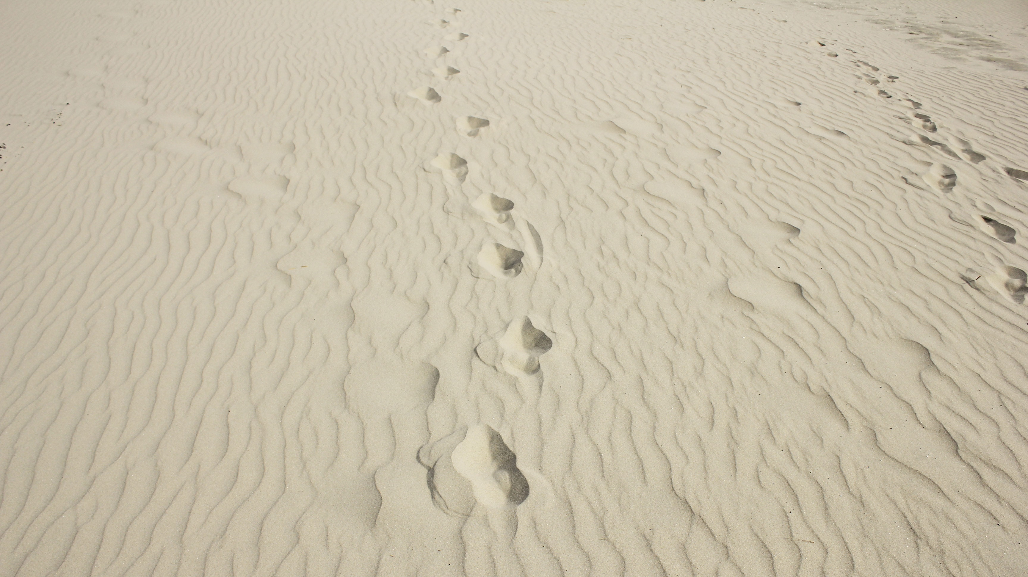 Insa ist auf Juist am Strand spaziert und hat Spuren im Sand hinterlassen.