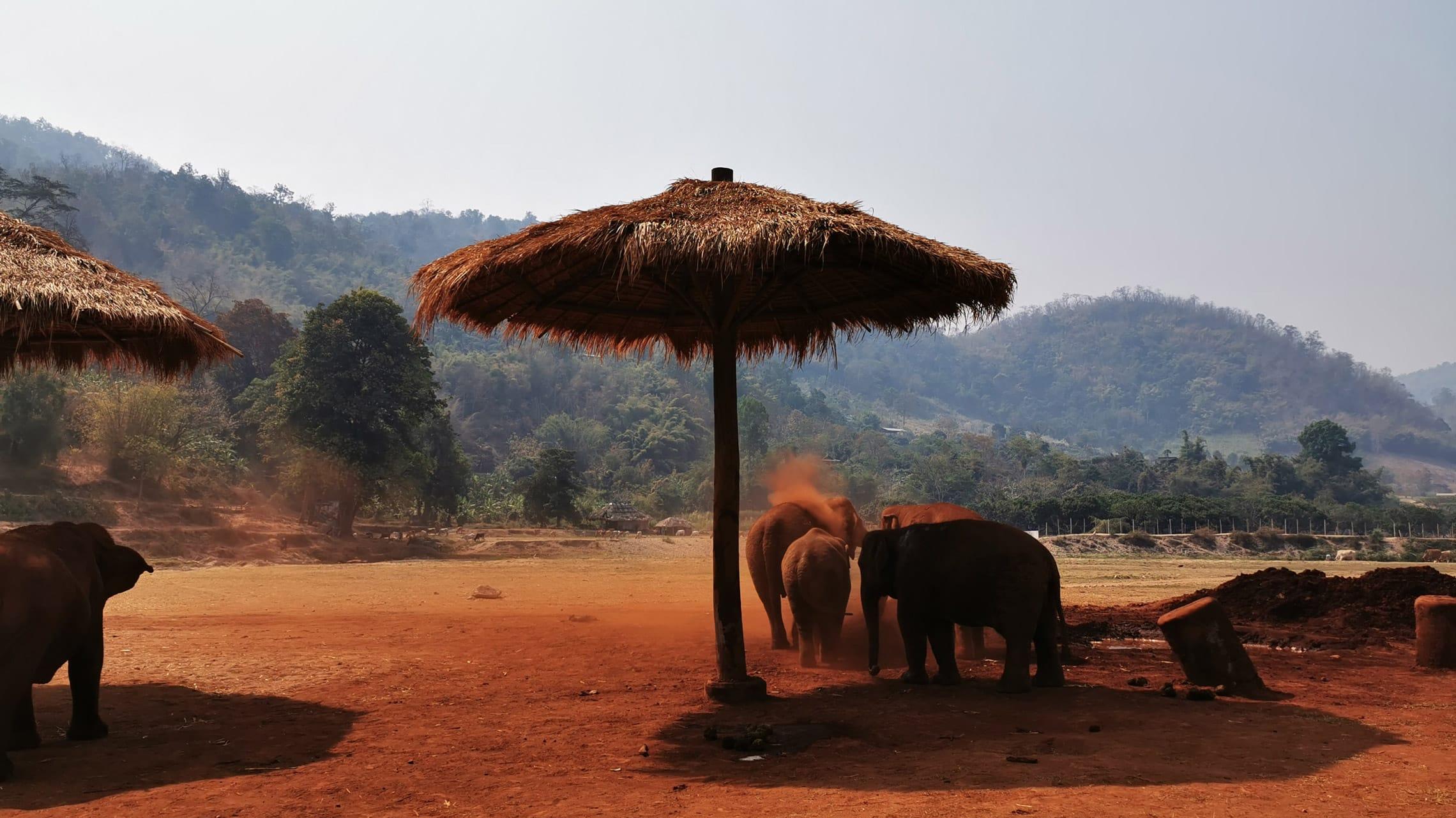 Bei den tropischen Temperaturen Thailands ist ein Staubbad zwingend nötig, schließlich können Elefanten nicht schwitzen und sind für eine Abkühlung sicherlich mehr als dankbar.