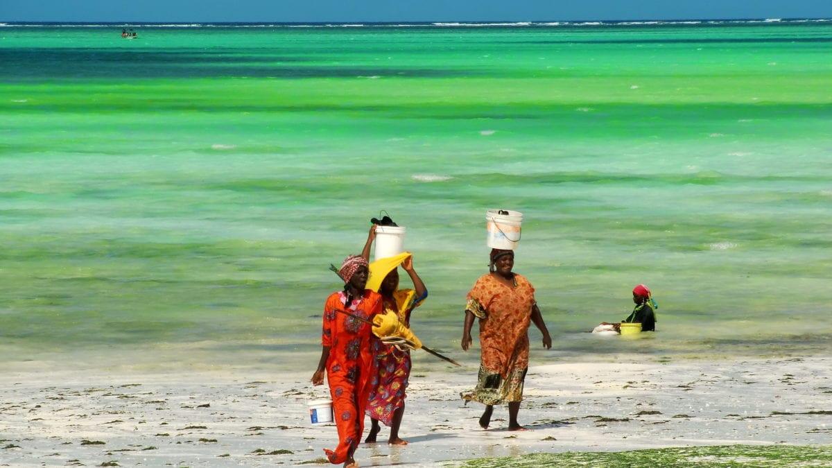 Frauen tragen Seegras in Eimern auf dem Kopf in Sansibar