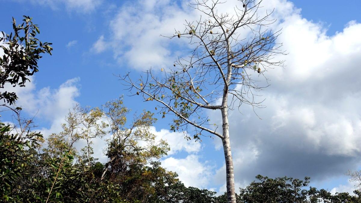 Toter Baum vor dem Himmel Kenyas