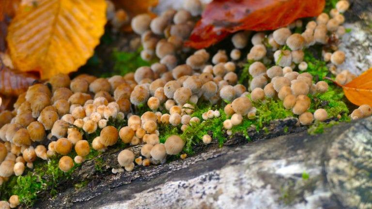 Wilde Pilze wachsen an so vielen Stellen im Wald